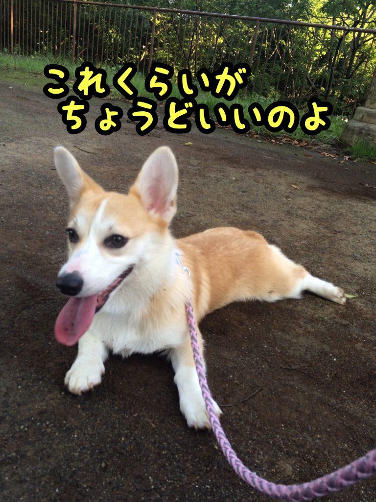2016-09-01 05.12.47