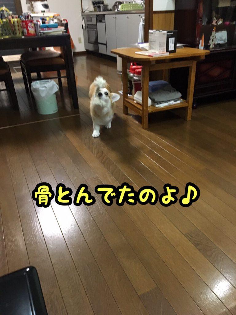 2016-09-24-20-04-59